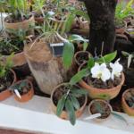 Orchids, Orchid Nursery Margaret Mee, Jardim Botânico de Brasília, Brasília, Brazil.