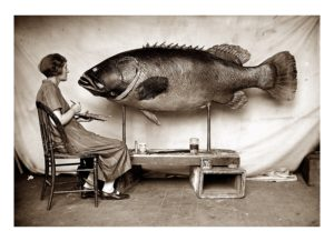 Preparation of a Queensland groper by Ethel King 1926. Photographer George C. Clutton. Australian Museum Archives AMS351_V09193. Reproduction Rights Australian Museum