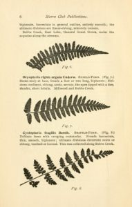 A flora of the South Fork of Kings River: from Millwood to the head waters of Bubbs Creek / by Alice Eastwood