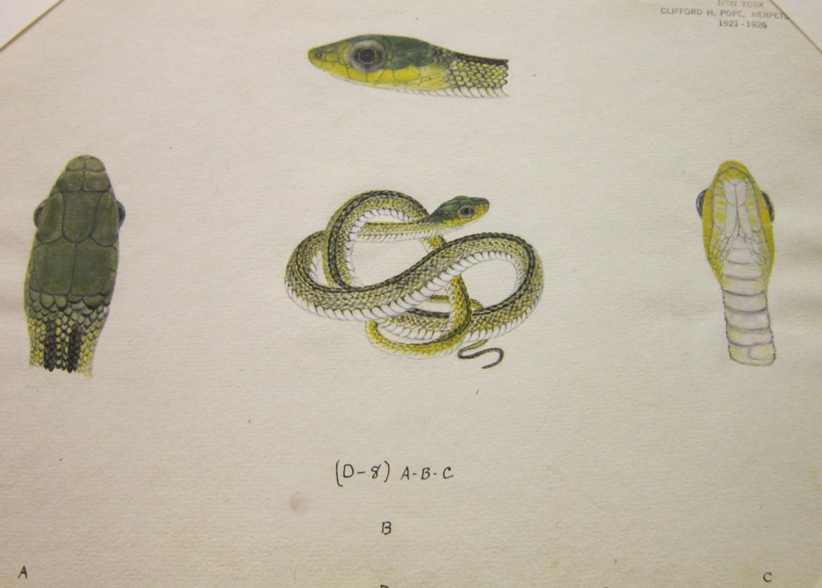 Fros_snakes_and_lizards-3