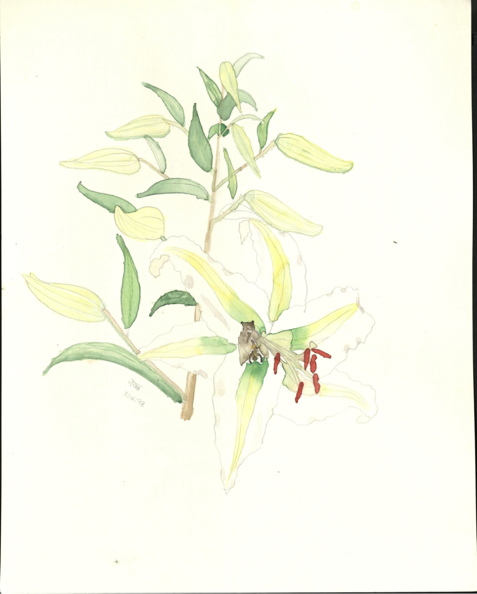 Lily by Varsha Mathrani, watercolor on paper